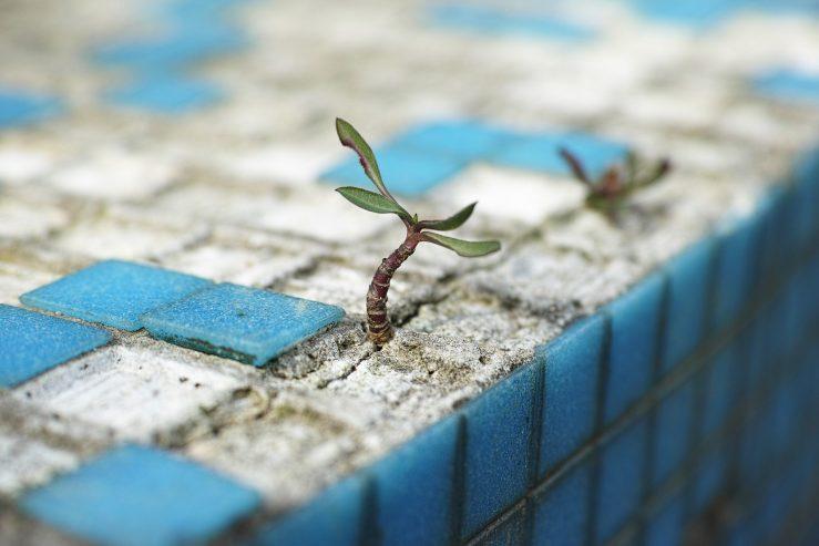 en planta växer upp ur stenmosaiken